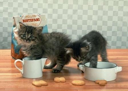 Берем котенка. Кот или кошка