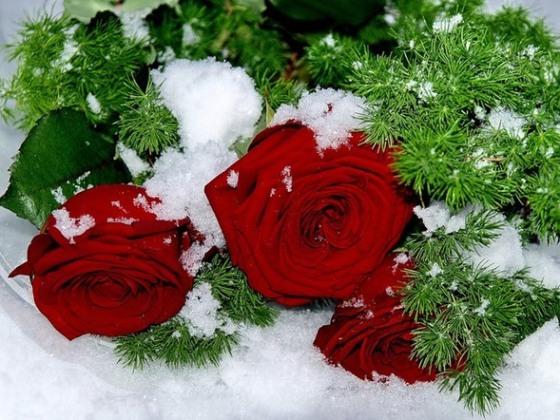 Как сохранить подаренные цветы