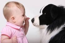 Какую собаку выбрать ребенку