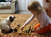 Какую породу котенка выбрать для ребенка