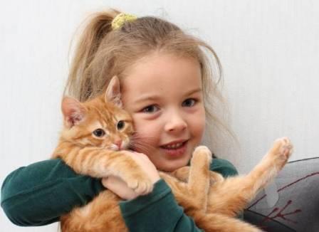 Если ребенок просит котенка