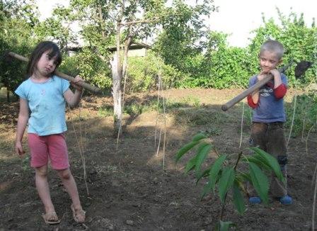 Зачем сад-огород современной семье