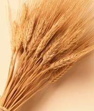 Зерно - основа многих диет