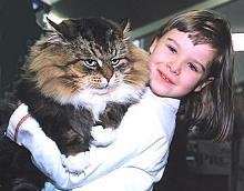 Породистые кошки для детей