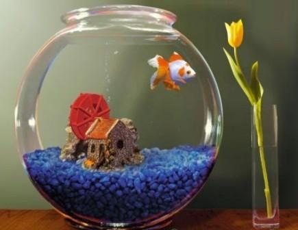 Какой аквариум купить ребенку?