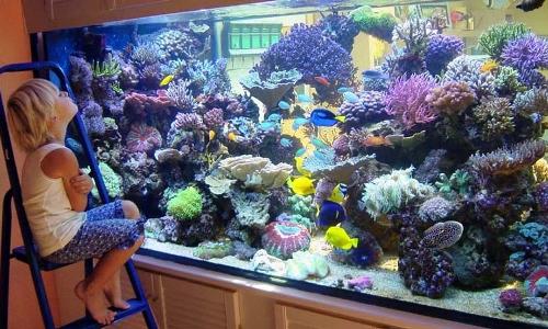 Первый аквариум у ребенка